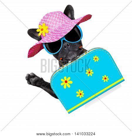 Dog On Summer  Holiday Vacation