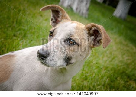 homeles dog with adorable face, cute puppy, anxiety in eyes, sad look