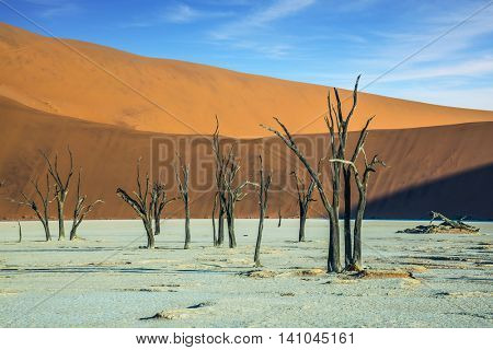 The dried lake Deadvlei. Scenic dried trees among the giant orange sand dunes. Namibia, ecotourism in Namib-Naukluft National Park