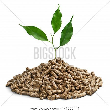 Pellet fuel with a plant growing out of it - isolated image