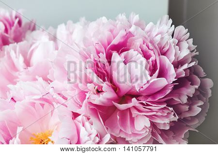 Beauty pink peonies peony roses flower macro. Pastel floral wallpaper background from flower petals. Holiday wedding concept. Bridal flowers. Bouquet of bride. Marriage. Card text place copy space.