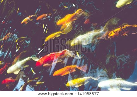 Crowd Of Koi Fish In Pond,colorful Natural Background,koi Is Symbolize Good Luck And Fortune