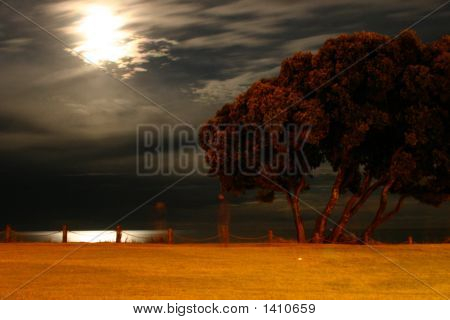 ITree along the coast lit up by the