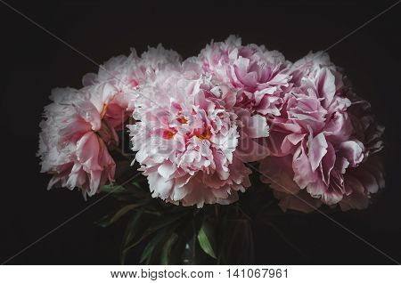 Beautiful bouquet of pink peony flower on black background. Peonies summer flower. Love floral. Macro image. card text copy space.