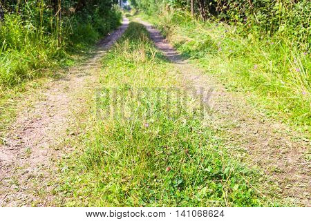 Tracks Of Country Road With Green Grass In Forest