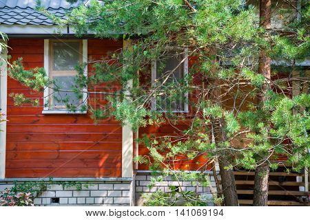 Pine Tree On Front Of Little Country Cottage