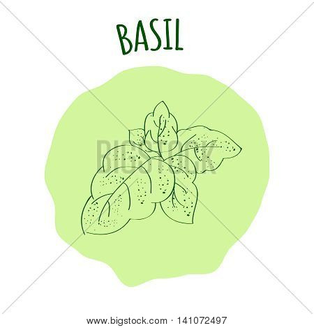 Hand drawn green basil branch with leaves isolated on a soft green background. Cooking ingredient for design. Spicy herbs seasoning. Vector illustration