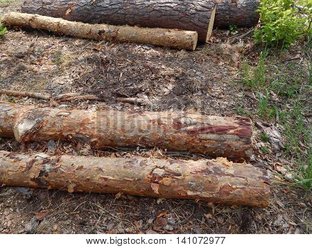 Wood texture timber tree felling timber, background, forestry