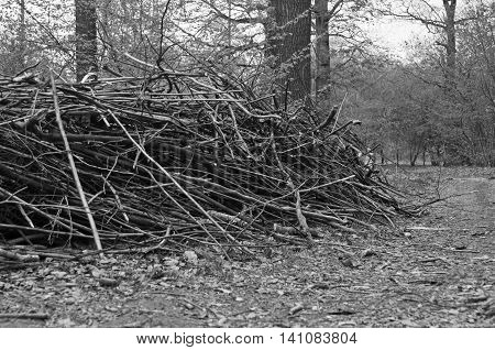 Firewood In The Forest At Summer Day Black And White
