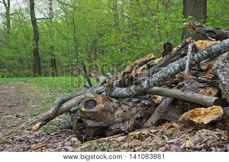 Pile Of Firewood In The Forest