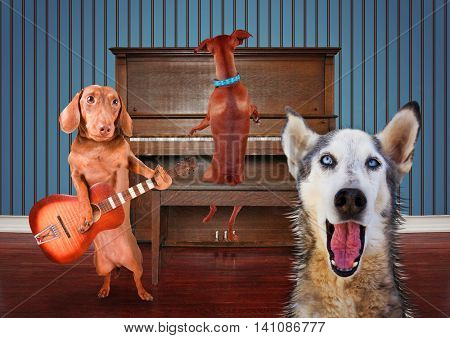 a trio of dogs singing in front of a piano good for greeting cards