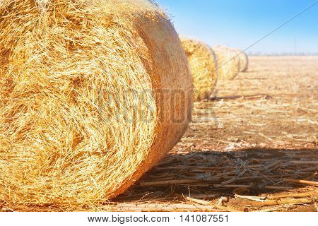 Summer field with hay bales on the background of blue sky. Agriculture concept.