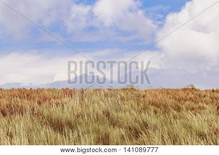 Meadow landscape scene from the top of Cruz Loma hill Quito Ecuador