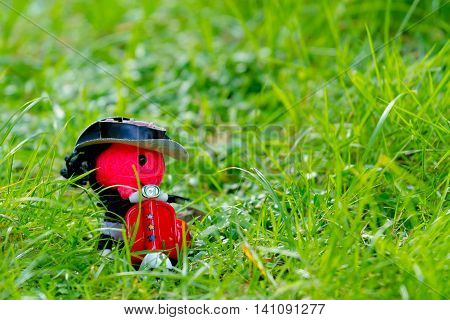 alone concept: the doll was left alone in the grass.