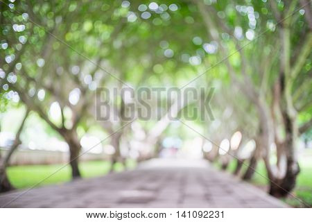 Abstract blur bokeh background of natural tree tunnel or bower pathway in the park