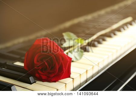 Red rose on piano key