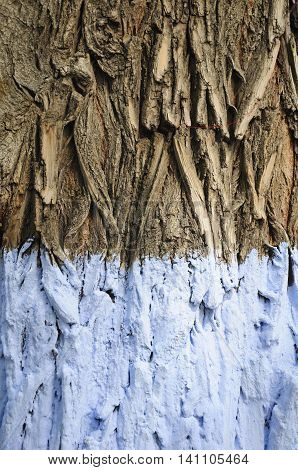 An abstact image of the shapes and patterns of tree bark as the lower half is painted white in Harbin China.