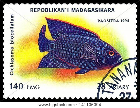 STAVROPOL RUSSIA - July 31 2016: a stamp printed by Malagasy Republic shows the fishes with the inscription Cichlasoma biocellatum series circa 1994