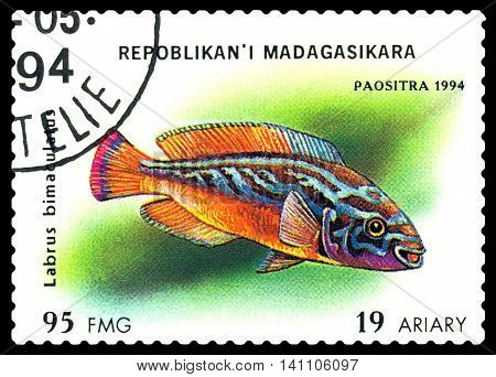 STAVROPOL RUSSIA - July 31 2016: a stamp printed by Malagasy Republic shows the fishes with the inscription Labrus bimaculatus series circa 1994