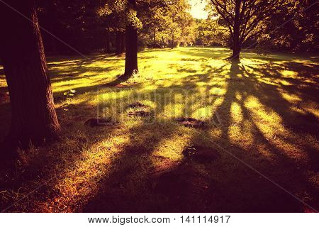 Vintage style photo of Trees casting large shadows in the woods.
