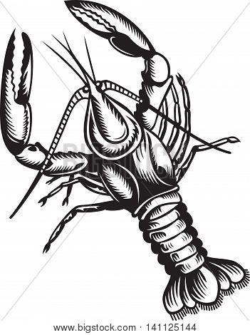 Stylized illustration of crayfish. Black and white colors