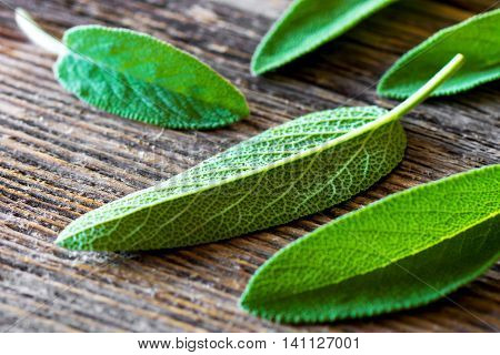 Fresh sage on an old wooden table. Selective focus
