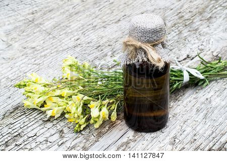Linaria vulgaris (common toadflax yellow toadflax or butter-and-eggs) and pharmaceutical bottle on old wooden table. In herbal medicine is used in the form of tinctures and ointments