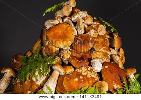 Big pile of fresh porcini mushrooms before cooking, decorated with green fern on a black background