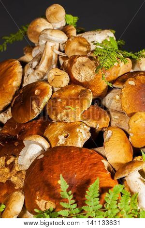 Big pile of fresh porcini mushrooms before cooking, decorated with green fern on a black background, vertical