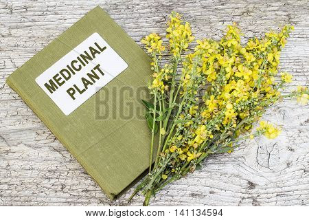 Mullein also known as velvet plant (Verbascum) and herbalist handbook on old wooden table. Plant is highly valued in herbal medicine it is used in the form of infusions decoctions ointments oils