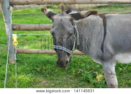 donkey in a farm, fence green pasture enclosure