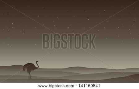 Silhouette of Ostrich in desert vector illustration