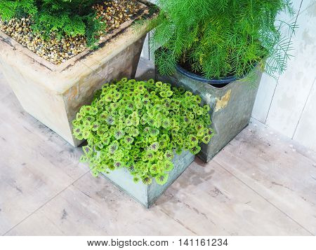 Group of small plants in concrete flowerpots