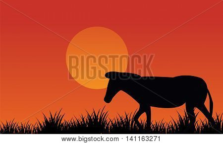 Silhouette of zebra scenery at afternoon on orange backgrounds