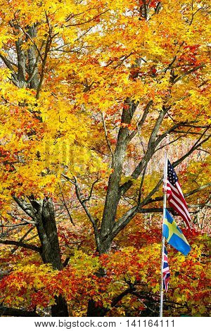 U.S.A., Sweden, United Kingdom flags in front of colorful fall trees.