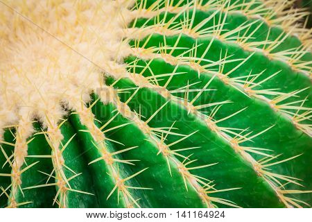 Cactus on the left side is big and beautiful.