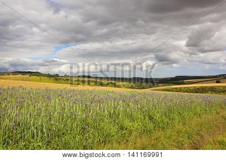 Flowers And Agricultural Landscape