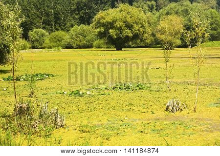 Scenic of a swamp in summer. Photo is taken in Kovilj, Serbia