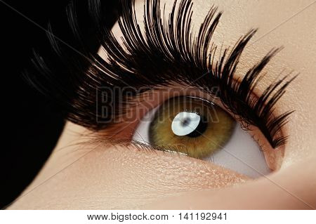 Beautiful Macro Shot Of Female Eye With Extreme Long Eyelashes A