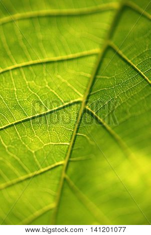 green leaf under sun light close up macro