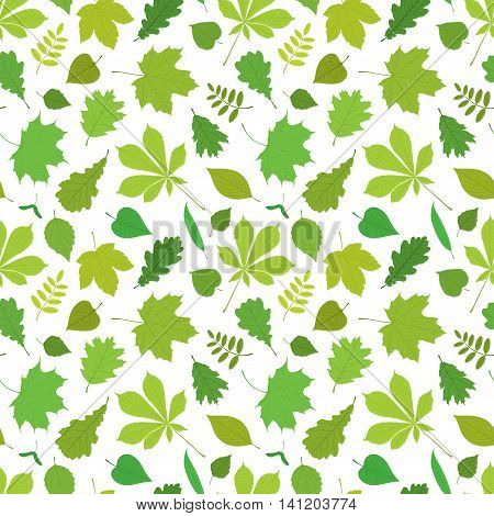 Seamless pattern of different, isolated tree leaves - oak, chestnut, birch, Rowan, linden, jasmine, lilac, maple, willow, poplar, sycamore. Vector illustration in color on white background.