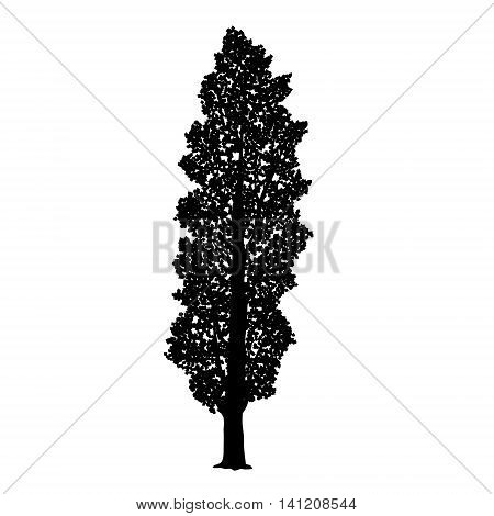 silhouette detached tree poplar with leaves on a white background