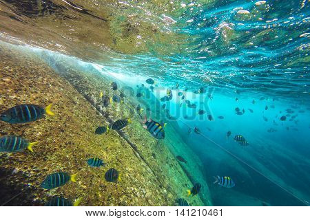 School of fish on the seabed of Similan Islands in Thailand. Underwater marine life in Andaman Sea.