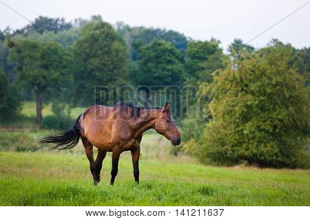 Horses grazing in a meadow at summer time