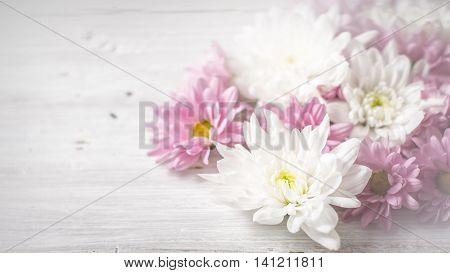 White and pink flowers on the white wooden background wide screen