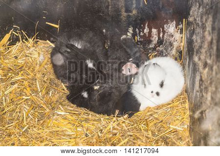 Bunny Family sitting closely in the rabbit hutch.