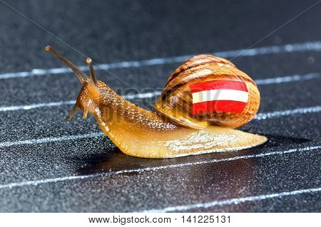Snail under the flag of Austria on the sports track moves to the finish line