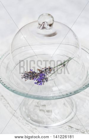 Twig of fresh purple fragrant lavender in transparent glass tray with cap on white cloth textile background
