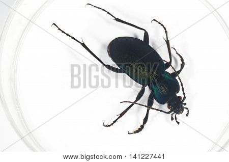 Details of a bug in a petri dish