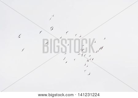Pigeons On The Fly
